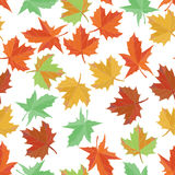 Autumn textile vector. Maple leaf seamless pattern. Foliage background. Green, yellow, orange and red. Stock Image