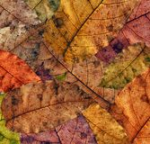 Autumn texture Royalty Free Stock Photo