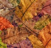 Autumn texture Royalty Free Stock Photo