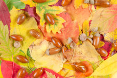 Autumn texture with acorn Stock Photos