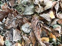 Autumn  texture royalty free stock photos
