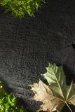 Autumn texture. Autumn colorful leaf of maple on black wooden texture with moss Stock Photos