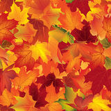Autumn texture. Fall pattern. Wallpaper with maple leaves. Stock Image