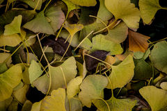 Autumn texture. Fallen leavs on the park ground Royalty Free Stock Image