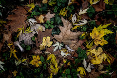 Autumn texture. Fallen leavs on the park ground Royalty Free Stock Photography