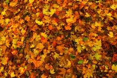 Autumn texture Stock Image
