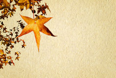 Autumn texture paper Royalty Free Stock Image