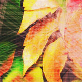 Autumn texture of yellow leaves Royalty Free Stock Photo