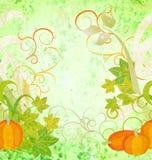 Autumn textured orange pumpkin background Royalty Free Stock Images