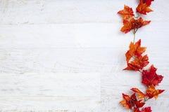 Autumn Thanksgiving Background Fotografie Stock Libere da Diritti