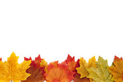 Autumn Thanksgiving Background Royaltyfria Bilder