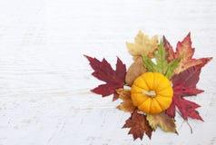 Autumn Thanksgiving Background Fotos de archivo
