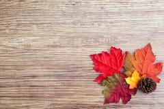 Autumn Thanksgiving Background Imagens de Stock