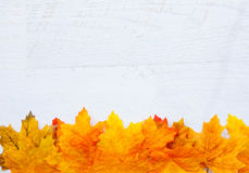 Autumn Thanksgiving Background Fotos de Stock Royalty Free