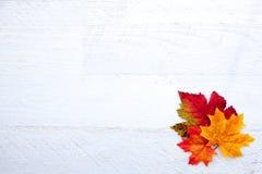 Autumn Thanksgiving Background Imagen de archivo libre de regalías