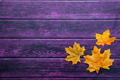 Autumn Thanksgiving Background Imagem de Stock Royalty Free