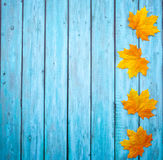 Autumn Thanksgiving Background Fotografía de archivo libre de regalías