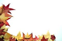Autumn Thanksgiving Background arkivfoton
