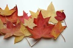 Autumn Thanksgiving Background royaltyfri bild