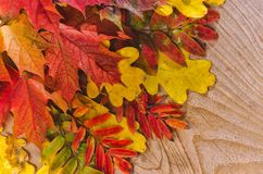 Autumn Thanksgiving Background Färgrikt lämnar arkivfoton
