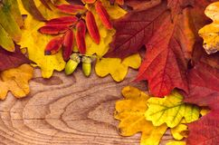 Autumn Thanksgiving Background Färgrikt lämnar Ram Tom sp royaltyfria bilder