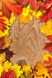 Autumn Thanksgiving Background Färgrikt lämnar Ram Tom sp royaltyfri foto