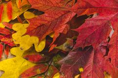 Autumn Thanksgiving Background Folhas coloridas foto de stock royalty free