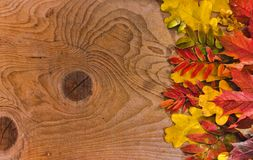 Autumn Thanksgiving Background Hojas coloridas imagenes de archivo
