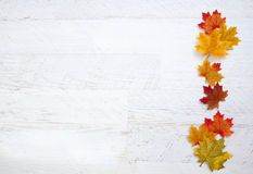 Autumn Thanksgiving Background Stock Images