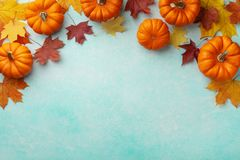 Autumn Thanksgiving background. Pumpkins and maple leaves on turquoise table top view. Autumn Thanksgiving background. Pumpkins and maple leaves on turquoise