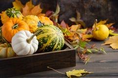 Autumn Thanksgiving Composition mit sortiertem Mini Pumpkins im hölzernen Behälter auf einem Holztisch Stockbilder