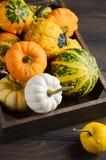 Autumn Thanksgiving Composition mit sortiertem Mini Pumpkins im hölzernen Behälter auf einem Holztisch Stockfotografie