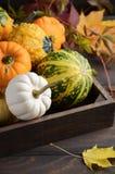 Autumn Thanksgiving Composition mit sortiertem Mini Pumpkins im hölzernen Behälter auf einem Holztisch Lizenzfreie Stockfotografie