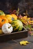 Autumn Thanksgiving Composition mit sortiertem Mini Pumpkins im hölzernen Behälter auf einem Holztisch Lizenzfreies Stockbild