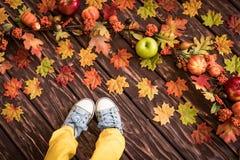 Autumn Thanksgiving Holiday Concept Fotos de Stock