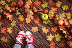 Autumn Thanksgiving Holiday Concept Imagens de Stock Royalty Free