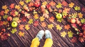 Autumn Thanksgiving Holiday Concept Fotos de Stock Royalty Free