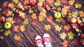 Autumn Thanksgiving Holiday Concept Stock Image