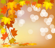 Autumn . Thanksgiving stock photo