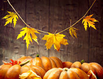 Autumn Thanksgiving-Kürbise über hölzernem Hintergrund Stockbild