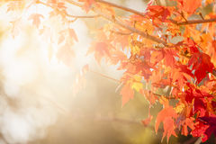Autumn Thanksgiving Leaves Background Royalty Free Stock Photo