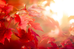 Autumn Thanksgiving Leaves Background. Thanksgiving holiday Background with leaves Stock Photos