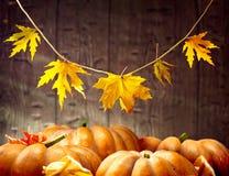 Autumn Thanksgiving pumpor över träbakgrund Fotografering för Bildbyråer