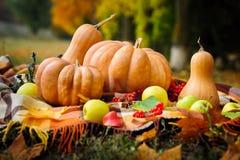 Autumn thanksgiving still life with pumpkins Stock Image