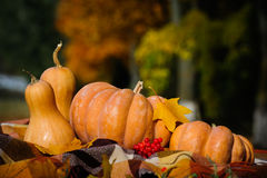 Autumn thanksgiving still life with pumpkins Royalty Free Stock Photos