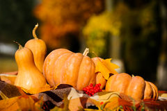Autumn thanksgiving still life with pumpkins Royalty Free Stock Photo