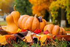 Autumn thanksgiving still life with pumpkins Stock Images