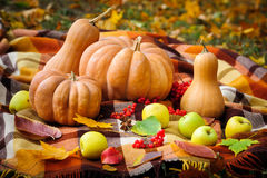 Autumn thanksgiving still life Royalty Free Stock Image