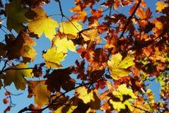 Autumn theme Stock Photo