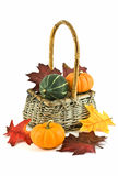 Autumn theme. Miniature pumpkins and autumn leaves in woven basket on white background, vertical format Royalty Free Stock Photography